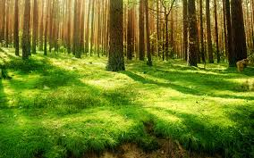 Forest Background 7022406