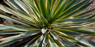 foliage with its wide range of shapes and colours is another way to add appeal to any garden bunnings greenlife
