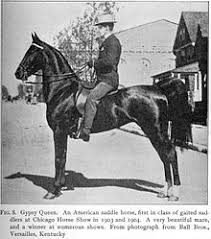 american saddlebred mare circa 1906