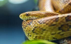 cute snake wallpaper. Modren Cute Desktop Worlds Biggest Snakes Wallpaper On Cute Snake Wallpaper P