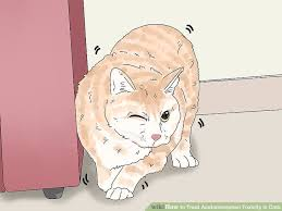 How To Treat Acetaminophen Toxicity In Cats 13 Steps