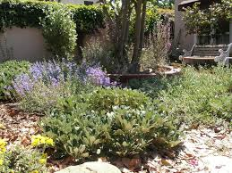 a los angeles native garden after 6 months grid24 12