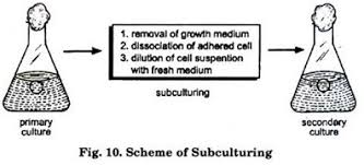 essay on plant tissue culture history methods and application scheme of subculturing