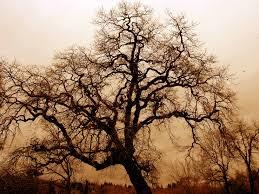 Gratis Afbeeldingen Landschap Natuur Bos Tak Bloesem Winter