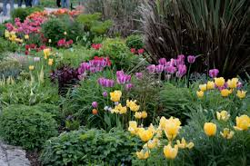 herbaceous border for how to plant spring bulbs