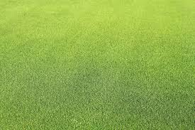 Grass Couch Hg Turf Santa Ana Couch