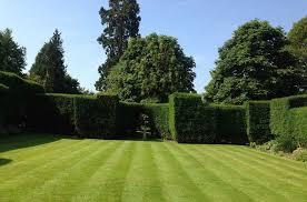 Podemos dizer que o principal fator limitante para a utilização da grama esmeralda em jardins é a luminosidade. A Grama Certa Para O Seu Jardim E Os Cuidados Com Ela