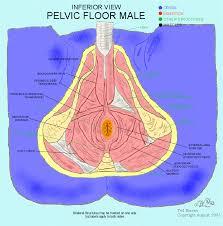 photos of male pelvic floor exercises