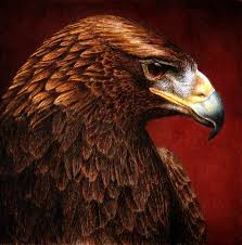 eagle painting golden look golden eagle by pat erickson
