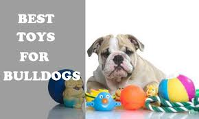 best toys for bulldogs picture