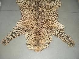 jaguar skin rug genuine antique leopard hide pelt lion tiger cheetah big cat