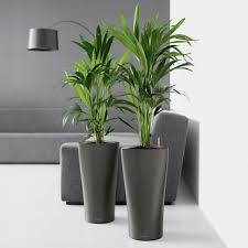 room plants x: nice indoor plants pots  home designing