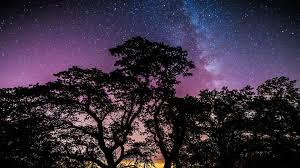 1920x1080 px galaxy stars trees