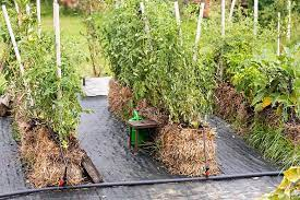 straw bale gardening a ultimate guide