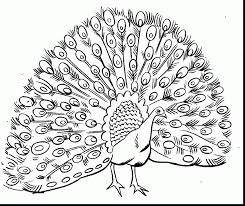Small Picture fantastic peacock coloring pages to print with coloring pages to