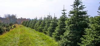 North Jersey Christmas Tree Farms  Best Of NJ NJ Lifestyle Christmas Tree Cutting Nj