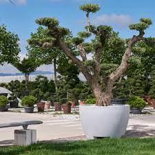 megalos extra large pot planter