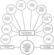 Курсовая работа возделывание картофеля сорта Раменский в  Разработка научно обоснованной технологии возделывания картофеля