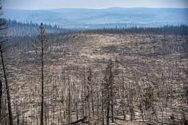 Did Oregon's massive Bootleg fire spawn ...