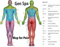 Spinal Dermatomes Chart Dermatome Chart Of The Human Body To Locate The Source Of
