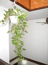 indoor plants that purify air in living
