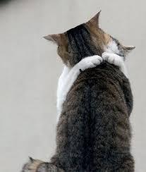 35 Pictures of <b>Cat</b> Hugs
