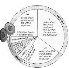 Life As We Know It (Biology 3 Laboratory Manual) - PDF Free Download