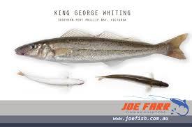 Joe Farr Fishing Charters Fishing Trips From Sorrento