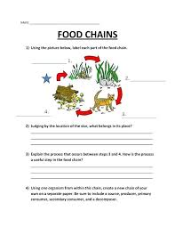 food web pyramid energy pyramid food chains worksheets and life science webs