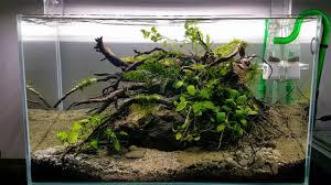 ada cube garden 60 p adam golik nano studio art