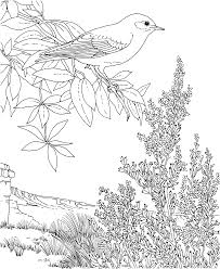 Small Picture Birds And Flowers At Bluebonnet Flower Coloring Page esonme