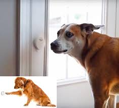 smart dog door bell lets you know when