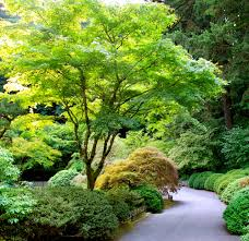 Small Picture Best 25 Japanese maple varieties ideas on Pinterest Dwarf