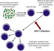 Hiv 1 Envelope Gp41 Antibodies Can Originate From Terminal