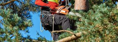 Image result for tree removal clearwater