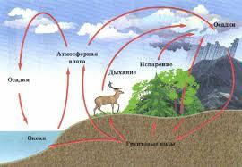 Круговорот воды в природе Экология Реферат доклад сообщение  Круговорот воды в биосфере