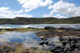 Bushrangers Bay Hike – Lusterly