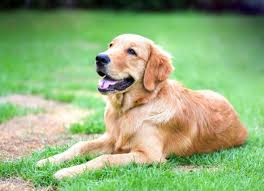 Skin Rash Due to Contact with Irritants in Dogs | petMD