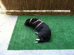 dogs bathroom grass. dog potty patch idea for an apartment patio dogs bathroom grass s