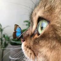 "7 ""Kathie Holden"" profiles | LinkedIn"