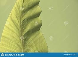 Light Green Aesthetic Minimal Green Leaf In Aesthetic Pastel Tone Stock Photo