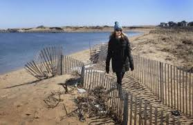 Officials Look To Fortify Plum Island Dunes Local News