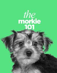Morkie Puppy Weight Chart The Morkie Dogs 101 Everything About Morkie Dogs