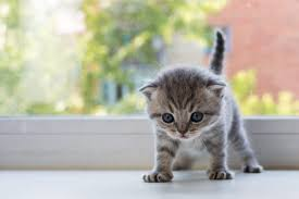 kittens.  Kittens You May Not Realize It But Felines Can Experience Anxiety Too Just Like  People Kittens Especially Much Children Suffer From Feelings Of  In N
