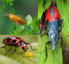 top 12 beneficial insects for garden how they help plants to grow well