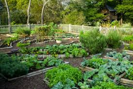 Small Picture Veggie Garden Design Garden ideas and garden design