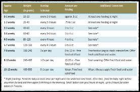 Food Measurement Chart 69 Skillful Food Quantity Chart Calculator