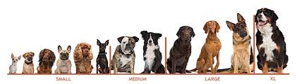 Dog Grooming Prices East Kilbride Glasgow Whistle