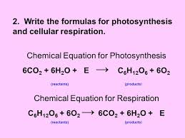 what is the equation for photosynthesis what is the chemical equation for photosynthesis photosynthesis facts for