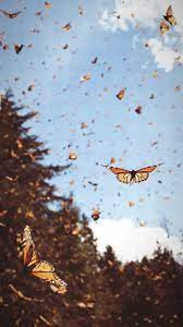 Aesthetic Tumblr Monarch Butterfly ...